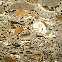 Природные камни: Ракушечник