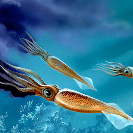 Белемнит - моллюск